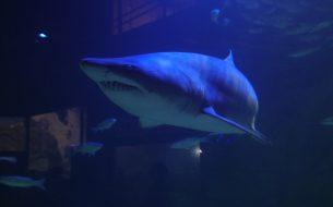 oceanic-aquarium-bc-01